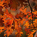 Autumn Oak by Steve Gadomski
