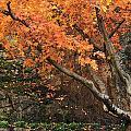 Autumn Of My Life by Terri Tuazon