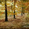 Autumn On Cannock Chase by Ann Garrett