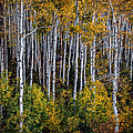 Autumn On Mcclure Pass by Ken Smith