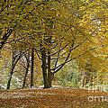 autumn on Moenchsberg in Salzburg by Rudi Prott
