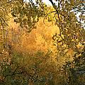 Autumn On The Bosque by Noa Mohlabane