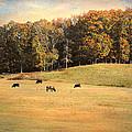 Autumn On The Farm by Jai Johnson