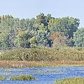 Autumn On The Marsh by Bonfire Photography