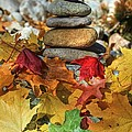 Autumn On The Rocks 2 by Donna Kennedy
