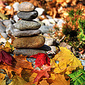 Autumn On The Rocks by Donna Kennedy
