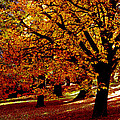 Autumn On Wombat Hill II by Chris Armytage