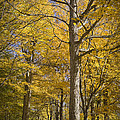 Autumn Orange Forest Colors At Hager Park No.1189 by Randall Nyhof