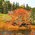 Autumn Orange by Gene Cyr