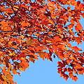 Autumn Orange by Lew Davis