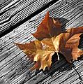 Autumn by Ovidiu Moise