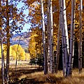 Autumn Paint Chama New Mexico by Kurt Van Wagner