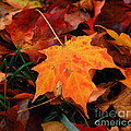 Autumn Palette  by Kerri Farley