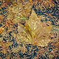 Autumn Palette by Roxy Hurtubise
