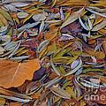 Autumn Palette by Steven Milner