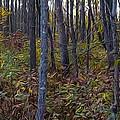 Autumn Panorama by Jacqueline Milner