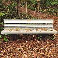Autumn Park Bench by Nikki Watson    McInnes