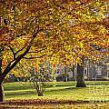 Autumn Park by Sophie McAulay