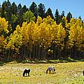 Autumn Pasture by Gary Benson