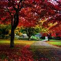 Autumn Path by Beverly Cash