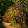Autumn Path by Denise Newman