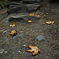 Autumn Path by Priya Ghose