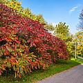 Autumn Path by Steve Harrington