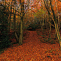 Autumn Pathway by Sarah Broadmeadow-Thomas