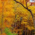 Autumn Peak Colors by Kay Novy