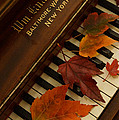 Autumn Piano 11 by Mick Anderson