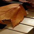 Autumn Piano 12 by Mick Anderson