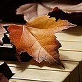 Autumn Piano 13 by Mick Anderson