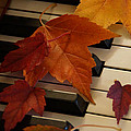 Autumn Piano 6 by Mick Anderson