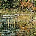 Autumn Pond Scene by Cheryl Baxter