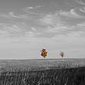 Autumn Prairie Trees by Dylan Punke