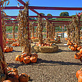 Autumn Pumpkin Patch by Joann Vitali