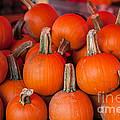 Autumn Pumpkins by Dale Powell