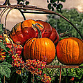 Autumn Pumpkins by Shannon Story