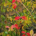 Autumn Rain by Robert Mitchell
