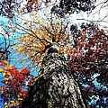 Autumn Rainbow by Phillip Woolf