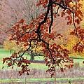 Autumn Rainbow by Todd Sherlock