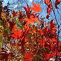 Autumn Reach  by Neal Eslinger