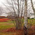 Autumn Red Field Maine  by Expressionistart studio Priscilla Batzell