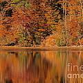 Autumn Reflection  by Amazing Jules