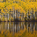 Autumn Reflection by Dustin  LeFevre