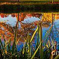 Autumn Reflection by Matt Hoffmann
