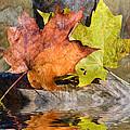 Autumn Reflection by Stephen Warren
