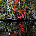 Autumn Reflections by DigiArt Diaries by Vicky B Fuller