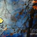 Autumn Reflections by Jason Kolenda
