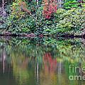 Autumn Reflections by Melissa Petrey
